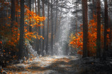 Autumn nature landscape. Colorful forest in sunlight. Scenery fall. Scenic ivid trees in woodland. Fall season.