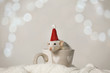 Leinwandbild Motiv Cute little rat with Santa hat in cup on knitted blanket against blurred lights. Chinese New Year symbol