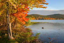 Autumn In Rockland Lake, New York.
