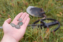 Treasure Hunt With A Metal Detector And A Shovel In The Field.