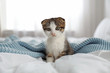 canvas print picture Adorable little kitten sitting on bed indoors