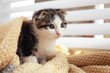 canvas print picture Adorable little kitten under blanket near window indoors