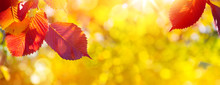 Art Autumn Leaves On The Sun. Blurred  Sunny Fall Background