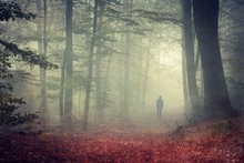 Man Walking On Forest Track At Haze