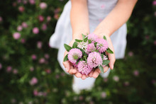 Girl's Hands With Clover Flowers
