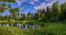 Wide Shot Of A Pond In The Mid...