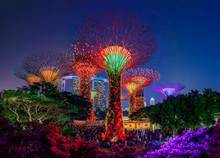 Garden Rhapsody, Colorful Ligh...
