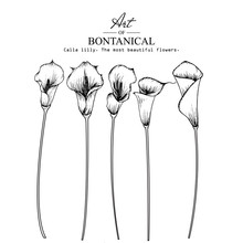 Sketch Floral Botany Collectio...