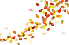 秋 舞う紅葉 (水彩色鉛筆)