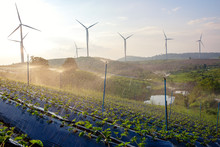 The Windmill Production For Electricity From The Energy Green Wind And Strawberry Plantation Water Splash Sprinter