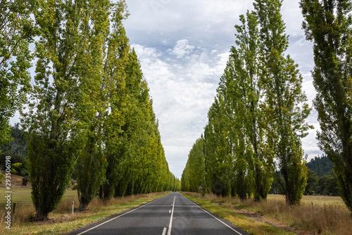 Fotografía Gould Memorial Drive between Buxton and Marysville in Victoria, Australia