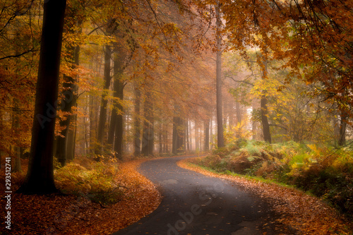 Wall Murals Natuur The road through the autumn forest, Ypres, Belgium