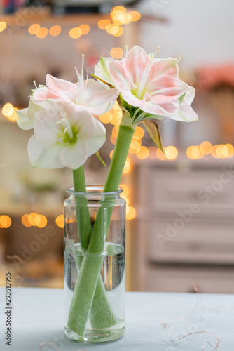 Photo Flowers in big glass vase