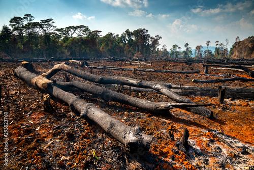 Vászonkép  Wood cutting, burning wood, destroying the environment