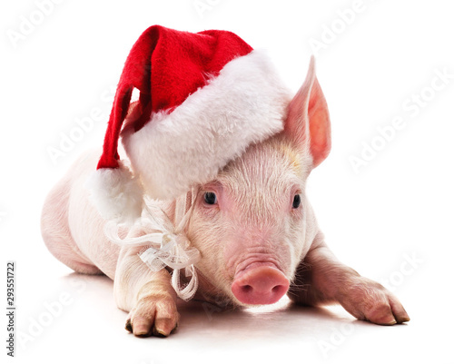 Piggy in Christmas hat.