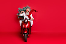 Full Length Photo Of Serious Retired Man Carry Fir Tree Drive Bike Have Eyewear Eyeglasses Wear White Sweater Trousers Boots Isolated Over Red Background