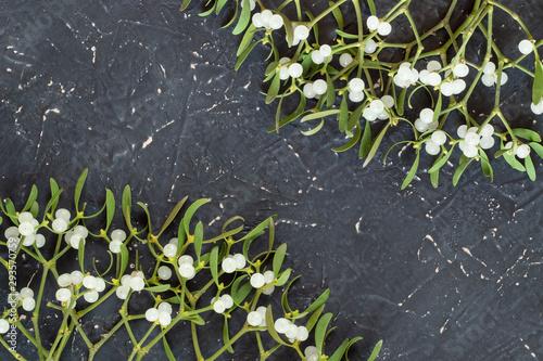 Obraz na płótnie Mistletoe branch on a gray textured background