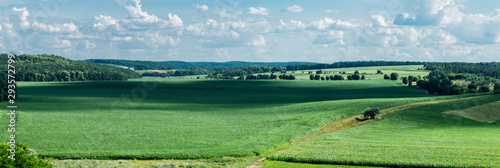 Photo sur Toile Olive Panoramic view of fields with corn. Village Popovka, Cherkasy region, Ukraine
