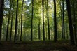 High green trees in the forest with the sun rays in Brussels
