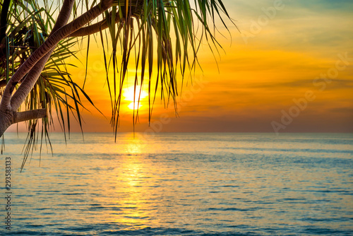Foto auf AluDibond Honig Beautiful landscape with sunset at tropical beach with palm trees