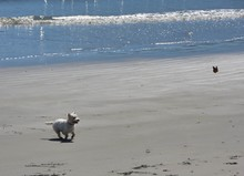 Little Dog And Monarch Butterfly On The Beach