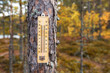 The thermometer on the background of autumn trees. Cold autumn day.