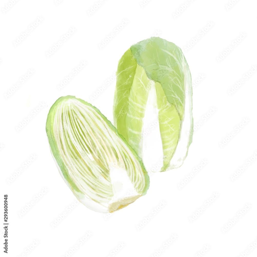 白菜 水彩画