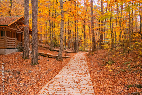 Poster Cuban Red Beautiful autumn views of Yedigoller National Park. Reflection of trees. Colored leaves. Falling leaves. Wooden stairs. Photo taken on 10th November 2018 Yedigoller