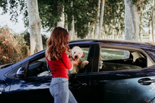 Young Caucasian Woman With Her Poodle Dog In A Car. Travel Concept. Lifestyle And Pets