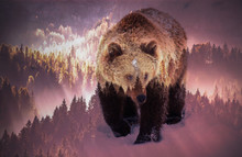 Double Exposure Of Brown Bear And Pine Forest - Save Our Forests And Wildlife, Fight Global Warming