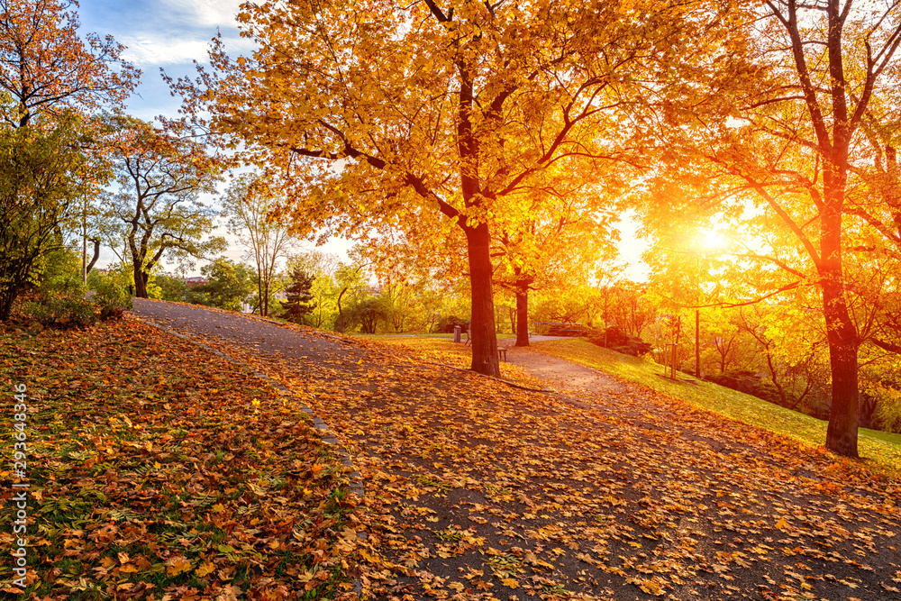 Fototapeta Autumn in Prague, beautiful sunny park on Vitkov hill, Zizkov district, Czech Republic, travel background