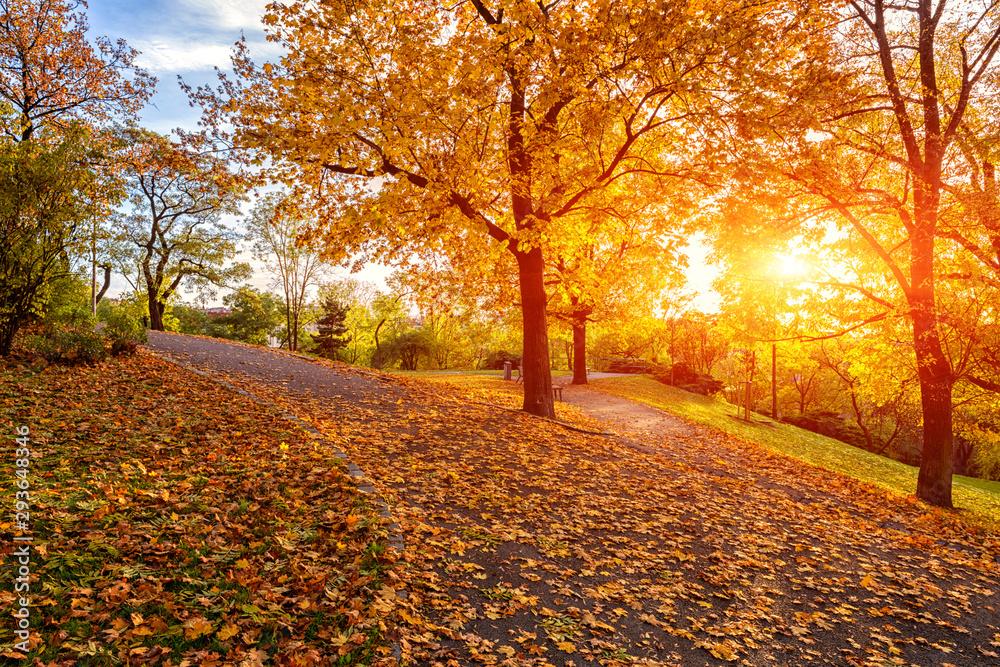 Fototapety, obrazy: Autumn in Prague, beautiful sunny park on Vitkov hill, Zizkov district, Czech Republic, travel background