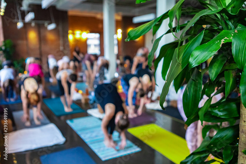 Diverse group of people in yoga class. A green plant is seen at the front of a gymnasium during a workshop honoring 108 rounds of surya namaskar, a traditional set of yogic poses, with copy-space - 293649395