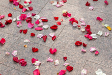 Rose Petals Are Scattered On T...