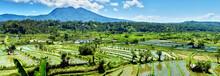Bali Candidasa Rice Terraces F...