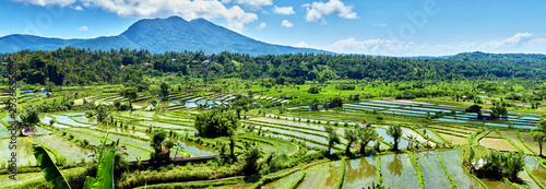 Door stickers Rice fields Bali Candidasa Rice Terraces field Indonesia panorama