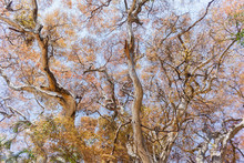 Large Tree Trunk Branches Scen...