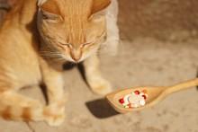 Sad Sick Cat Sitting Outdoor. ...