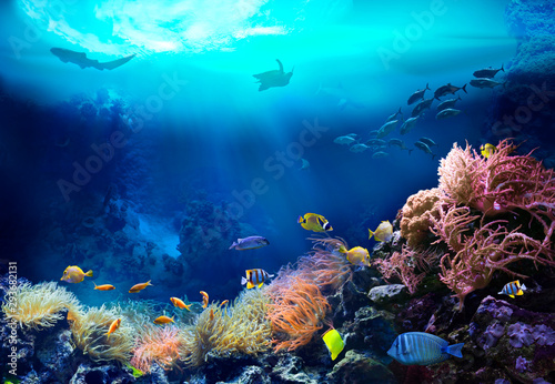 Poster Coral reefs Underwater view of the coral reef. Ecosystem. Life in tropical waters.