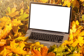 modern laptop in autumn landscape