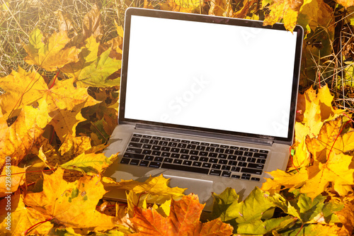 Photo sur Aluminium Fleur modern laptop in autumn landscape