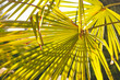 canvas print picture - Blätter einer Fächerpalme von unten gegen die Sonne und nach oben in den Himmel fotografiert mit besonderer Lichtstimmung und einem schönem Schattenspiel