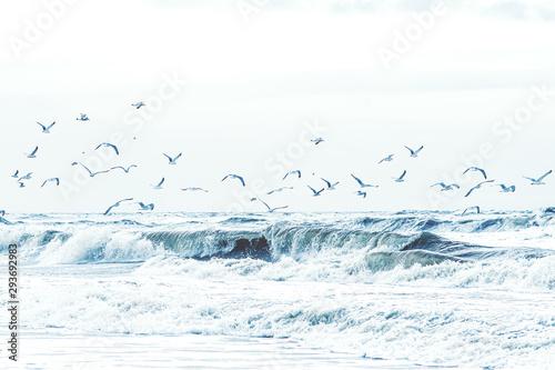 Viele Möwen fliegen über der Gischt der Nordsee