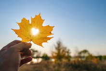 Autumn Yellow Leaf Of Maple With Cut Heart In A Hand Against Blue Sky On Sunset