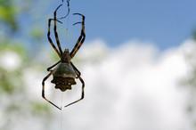 Spider Against Sky Background