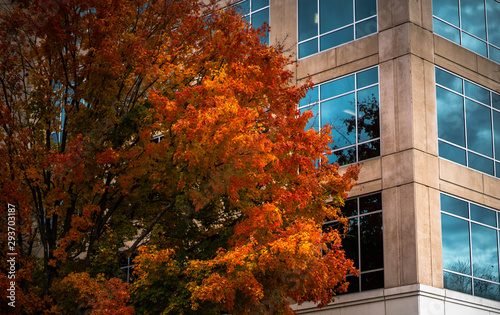 Slika na platnu orange leaves and tree with blue windowed building