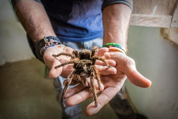 Man holding big spider