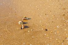 A Few Shells On The Beach Near...