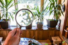 Indoor Damp & Air Quality (IAQ) Testing. Houseplants Are Seen Through A Magnification Lens During A Home Inspection, Potted Green Plants On A Window Ledge In A Family Room, With Blurred Background.
