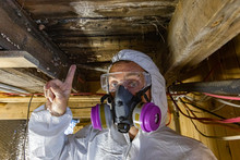 Indoor Damp & Air Quality (IAQ) Testing. An Indoor Home Inspector Points Towards Condemned Wood Inside A Domestic Building, White Fungi Are Seen Growing On Joists And Floor Planks, Rotting Wood Indoor